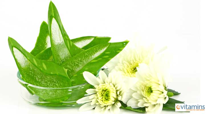 Aloe Vera for Oral Health