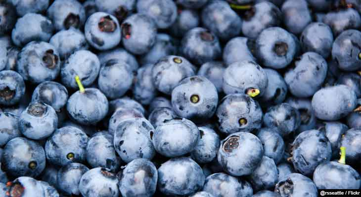 A recent study testing blueberries as fat burners produces promising results and may be the first step toward blueberry based fat burners.