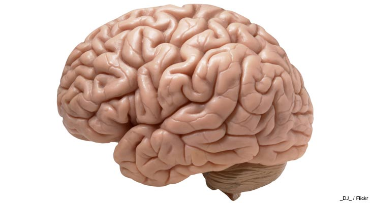 DHA is a fundamental nutrient for proper brain development and continued function. Learn all about it in today's post.