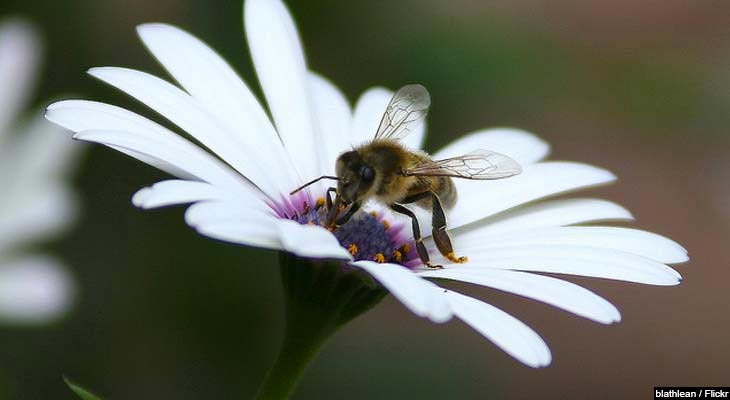 Health Benefits of Bee Propolis - eVitamins com