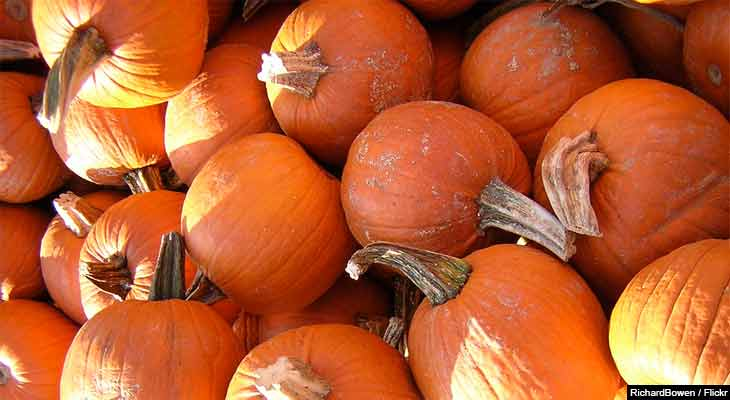 Pumpkins and apple cider are iconic images of fall and Halloween but their real value is in their nutritional content.