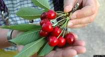 5 Great Reasons to Try Tart Cherry