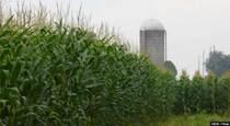 Comparing Corn Syrup to Cane Sugar