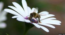 Health Benefits of Bee Propolis