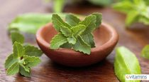 Learn More About Natural Sweetener Stevia