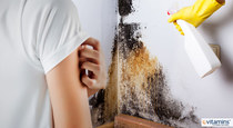The Hidden Health Dangers of Mold