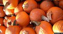 The Nutritional Value of Pumpkins, Apple Cider