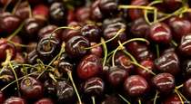 The Sweet Truth About Tart Cherries