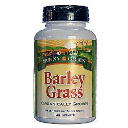 Sunny Green Barley Grass