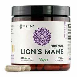 Tribe Organics Lion's Mane